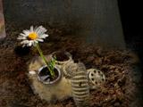 Last Flower Defence