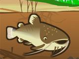 Cat Fish Fry