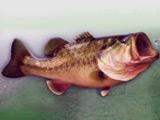 Bass Fishing Challenge